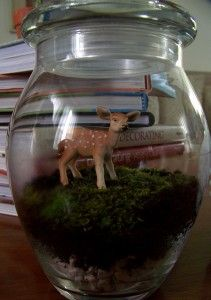 Crafting a Green World   Handmade Holidays: Making a Moss Terrarium   Page: 1   Crafting a Green World