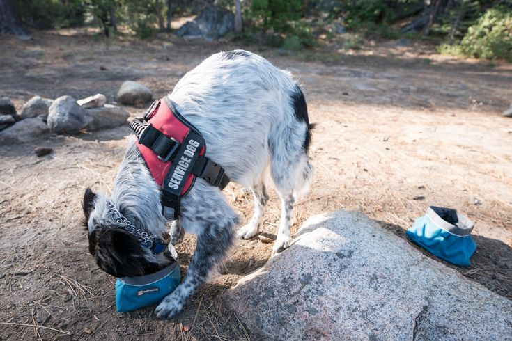 Best Outdoor Gifts for Adventure Dog Owners