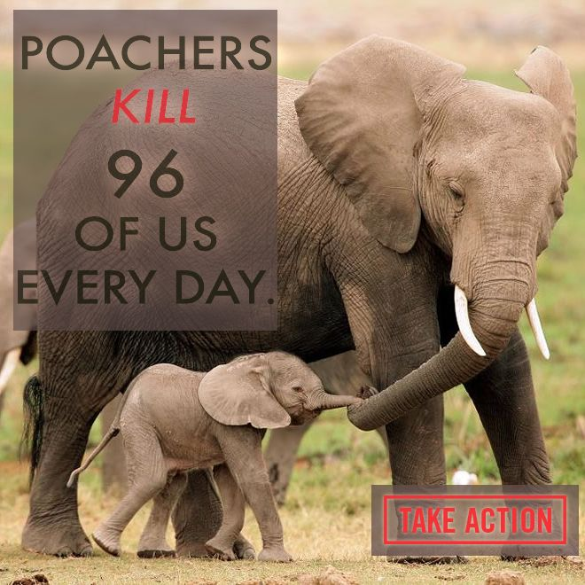 Demand for ivory causes the tragic poaching of elephants. Take action to save these amazing creatures now!: