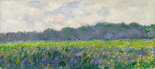 Reproduction de Monet, Champ d'iris jaunes. Tableau peint à la main dans nos ateliers. Peinture à l'huile sur toile.