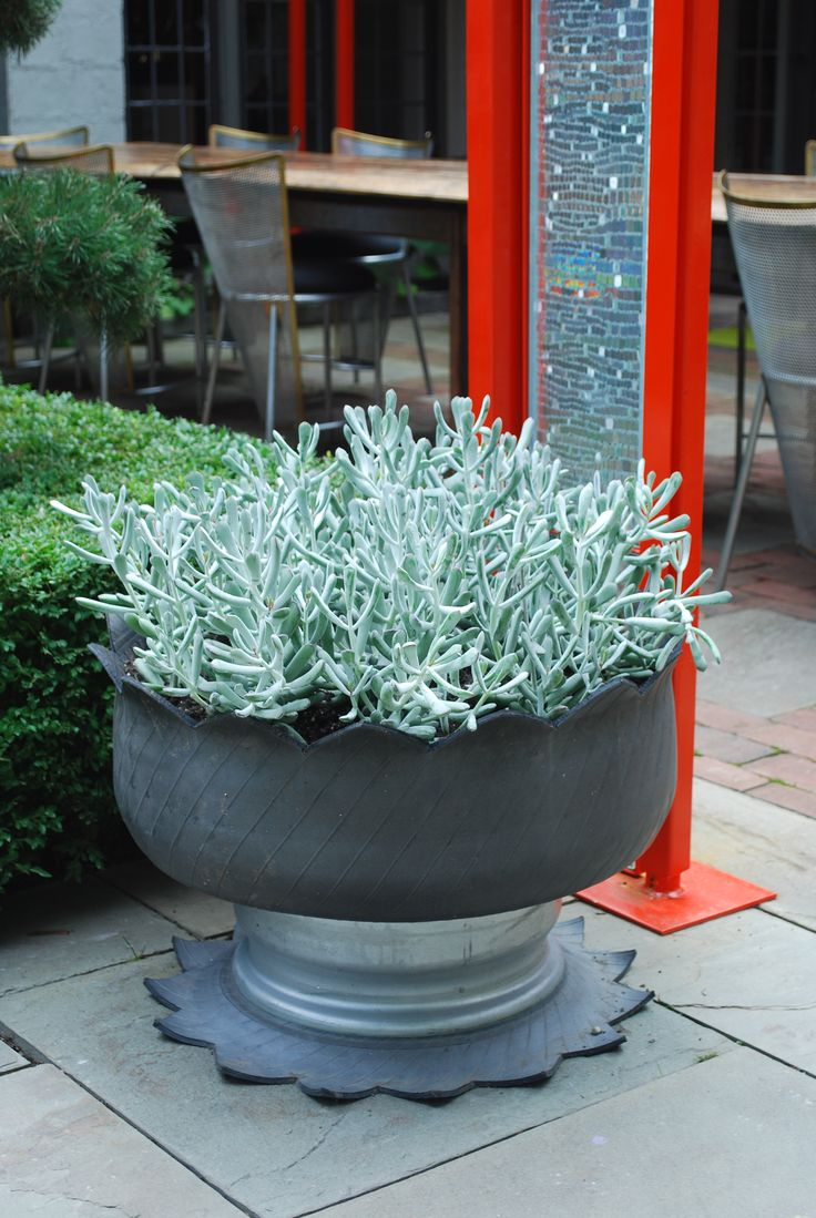 98 Best Images About Green Container Plantings On