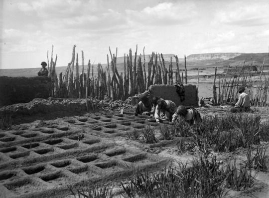 Jesse Nusbaum Waffle Gardens At Zuni Pueblo, New Mexico, 1925 PALACE OF THE  GOVERNORS