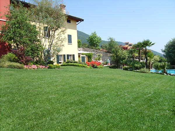 Variet di erba per il prato qual la pi adatta al tuo for Tipi di prato