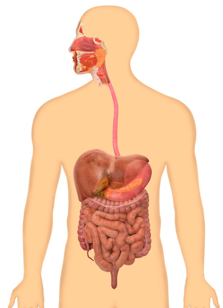 12 best digestive system images on pinterest anatomy anatomy dk find out the digestive system ccuart Choice Image