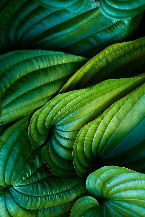 Texture et détails de feuilles verte
