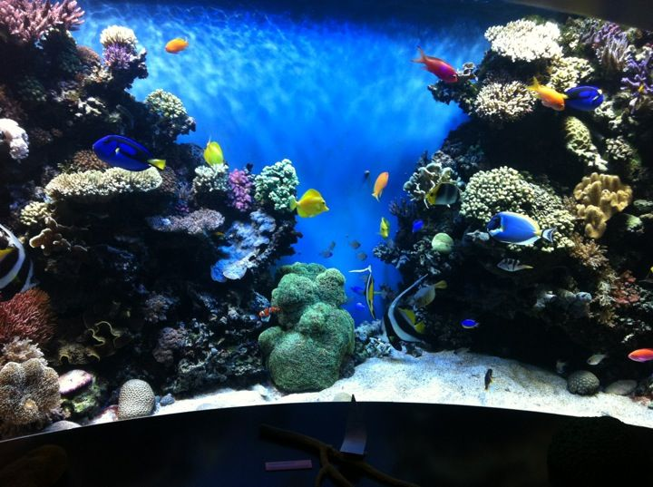 Monterey Bay Aquarium in Monterey, CA  July 13, 2015