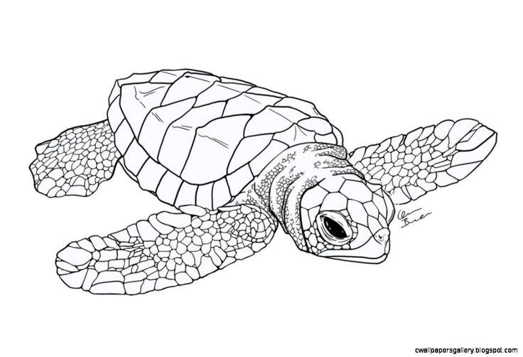 Best 25+ Surfboard drawing ideas on Pinterest
