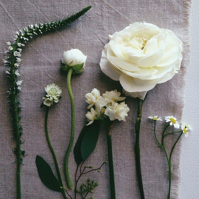 white flowers / ginny branch