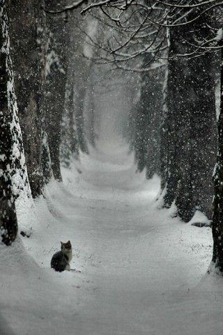 cat in snow: Cats, Animals, Winter Wonderland, Snow, Road, Photo, Kitty