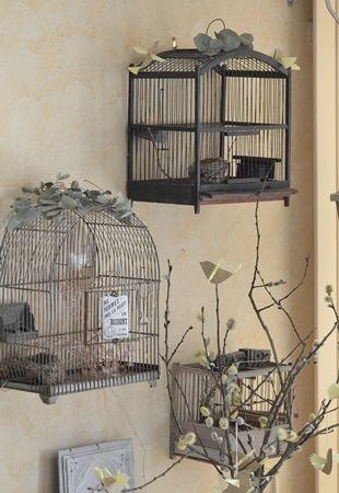 Les 25 meilleures id es concernant cages oiseaux sur for Petite cage a oiseaux decorative