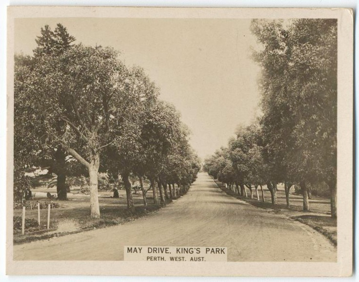 May Drive, King's Park, Perth, Western Australia.  (ca.1922-1929	)