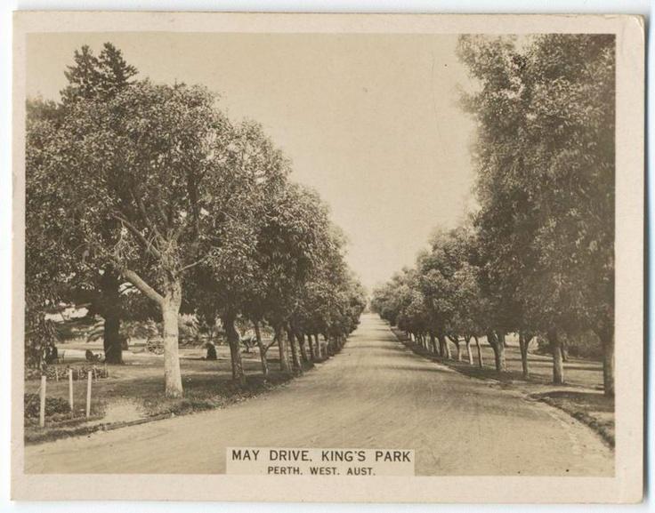 King's Park, Perth, Western Australia.                (ca. 1922-1929