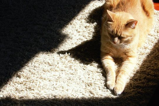 How To Naturally Clean Up Pet Vomit From Carpet Carpets