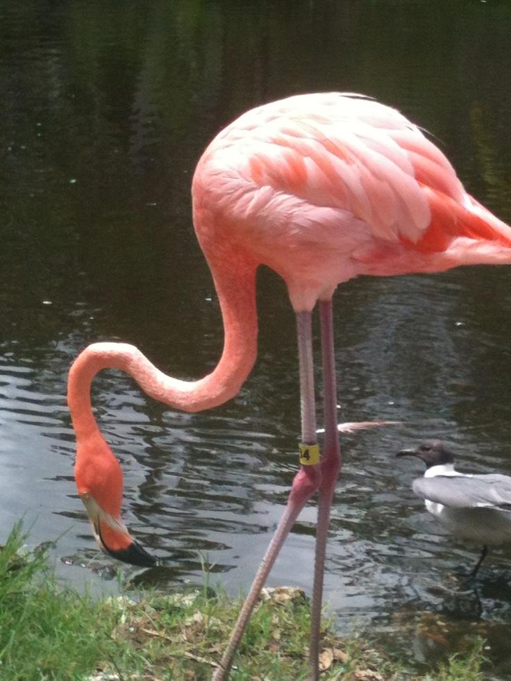 Sarasota Jungle Gardens   Sarasota, FL | Sarasota Jungle Gardens |  Pinterest | Gardens, Jungles And Jungle Gardens