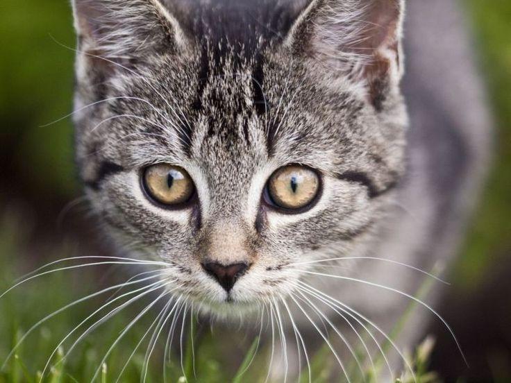 """Der dritte Platz der beliebtesten Katzennamen geht an """"Lucy""""    www.einfachtierisch.de"""