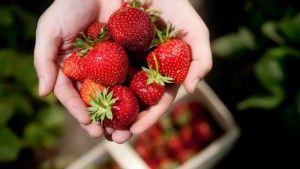 So gesund, beliebt und vielseitig ist die Erdbeere