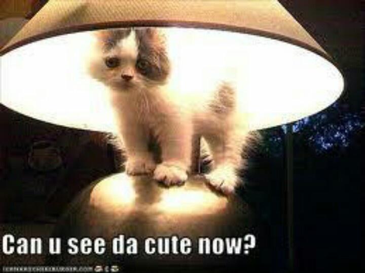 Funny Lamps 67 best cat decor: lamps images on pinterest   cat decor, cat