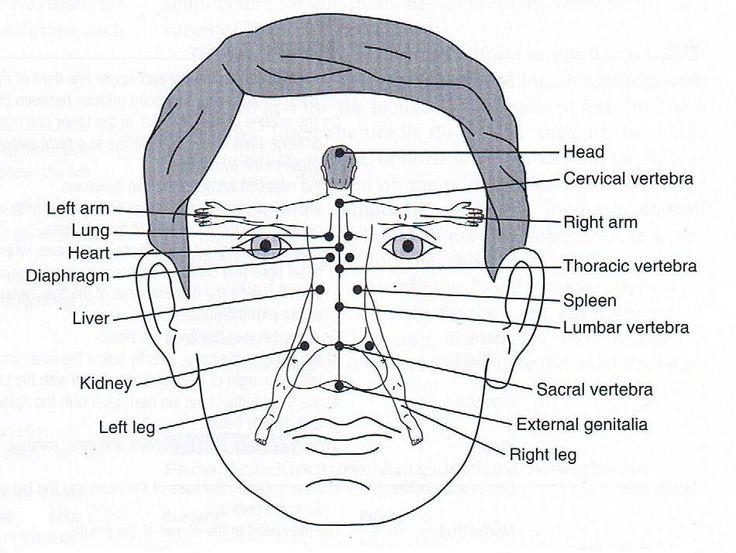 Facial map chinese medicine