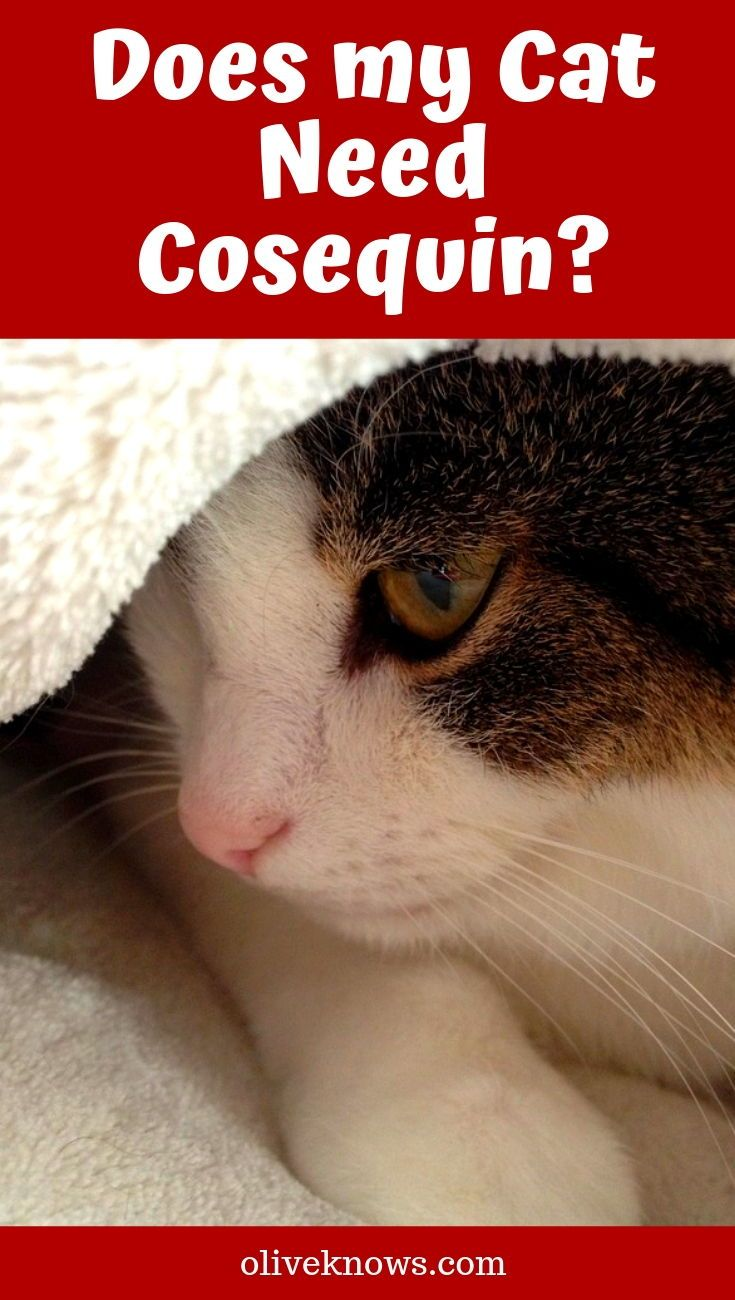 Does My Cat Need Cosequin Cat Food Brands Cat Food Dry Cat Food Brands