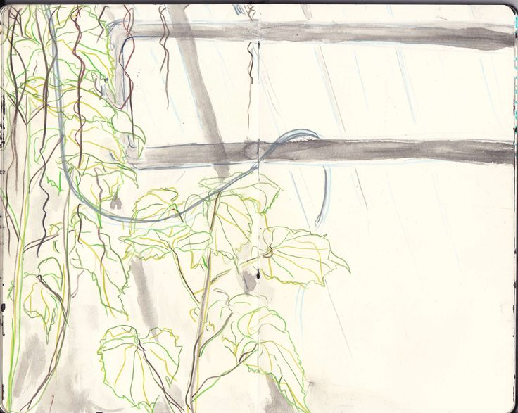 Plant drawing by Karoliina Pärnänen, 2016.