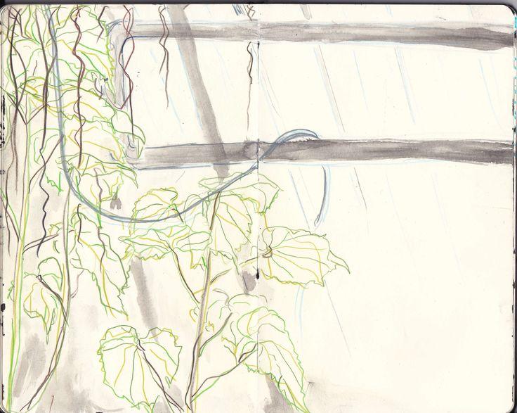 Plant drawing by Karoliina Pärnänen, 2016.