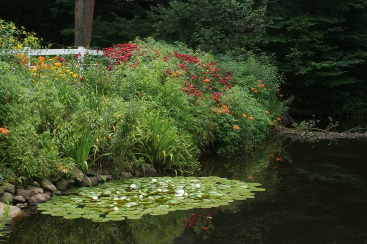 17 best images about cap cod inspiration on pinterest for Native pond plants