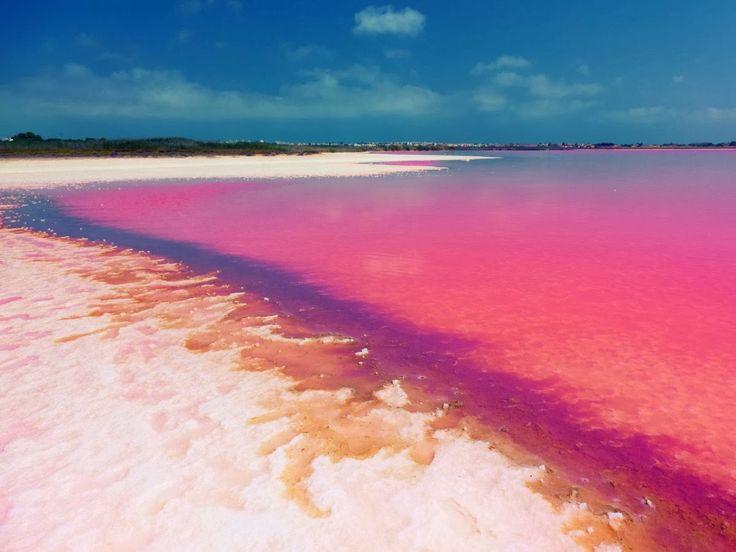 Costa UNO DE LOS INCREÍBLES LAGOS ROSAS DEL PLANETA; El lago Hillier es un lago situado en la isla Middle, la mayor isla del archipiélago de La Recherche, Australia Occidental (Australia). El color es permanente y no cambia cuando se vierte el agua en un recipiente. La longitud del lago es de unos seiscientos metros aproximadamente. El lago está rodeado por un borde de arena y un bosque denso, que lo separa del Océano Antártico.