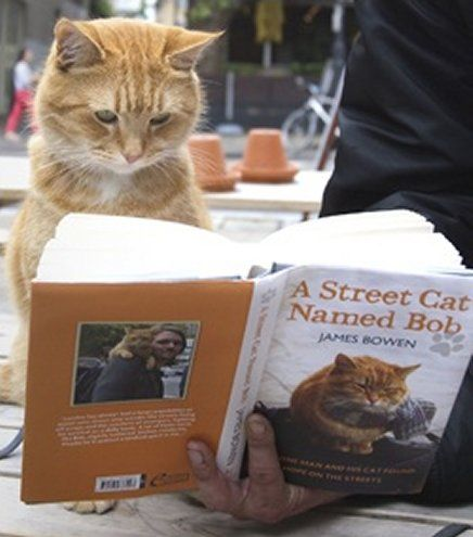 The Street Cat named Bob Proof Reading his Book