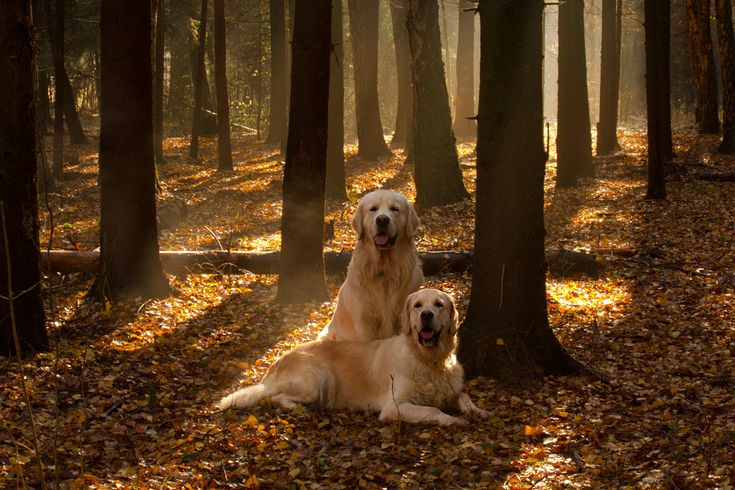 24 Best Animals Dogs And Wood Images On Pinterest
