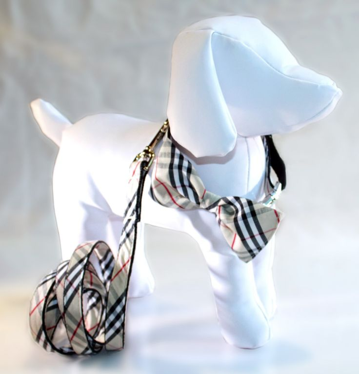 burberry dog bow tie ... OMG!