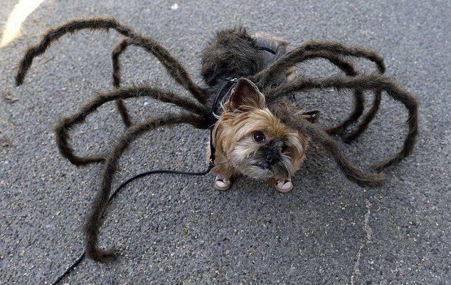 woof - spider-dog