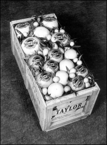 Crate of Florida grapefruit: Winter Haven, Florida (ca. 1940)