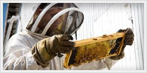 100% chemical-free bee removal service! Get your guaranteed solution today without the use of pesticides. The entire beehive will be collected with our specialized bee-vacuum then transported to a beekeeper. Keep bees alive - just not on your property! http://www.propacificbee.com/orange-county-service-area/