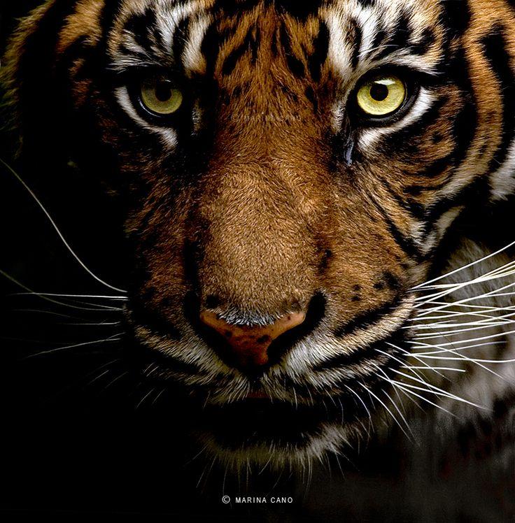 Tierfotografie von Marina Cano   – braun/blau/grün/grau