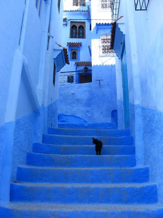 画像 : モロッコの青い秘境シャウエン×ネコのいる風景 - NAVER まとめ