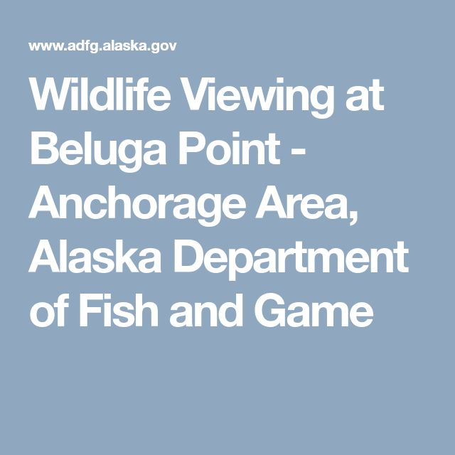 Wildlife Viewing at Beluga Point - Anchorage Area, Alaska Department of Fish and Game