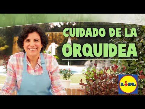 Cuidado De La Orquídea - Lidl Jardín - YouTube