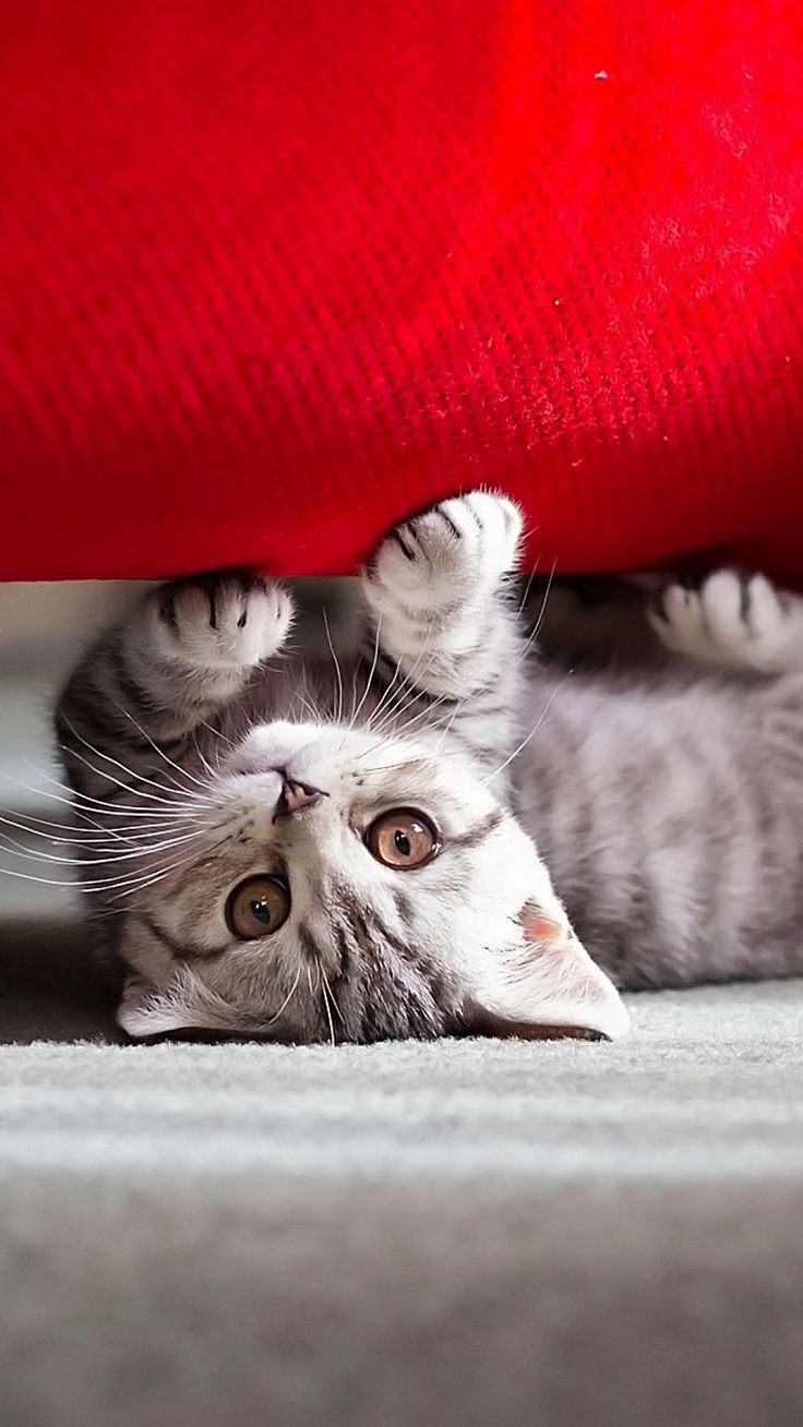 Cute kitten htc wallpaper cats pinterest cats kittens and