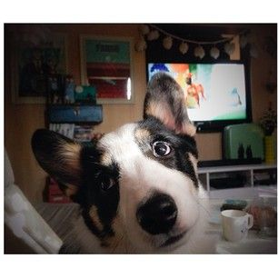 """""""Sorry, but I'm hella comfortable right now. You can get up to get your coffee in a minute, mmk?"""" 