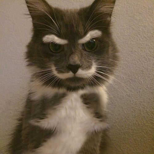 眉毛とひげがイケメンな猫の写真