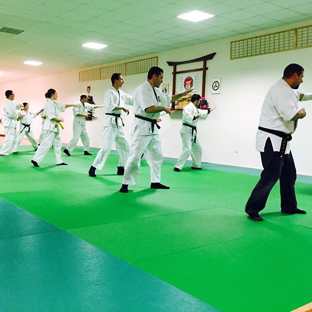 Looks like everything is going well back home  // Úgy tűnik, otthon minden rendben megy  #szegedbudokan #martialarts #academy #szeged #harcművészet #seibukan #jujutsu #jiujitsu #seibukanjujutsu #art #basics #learning #training #practice #whitebelt #samurai #spirit #warrior #mentality #mylife #lifestyle