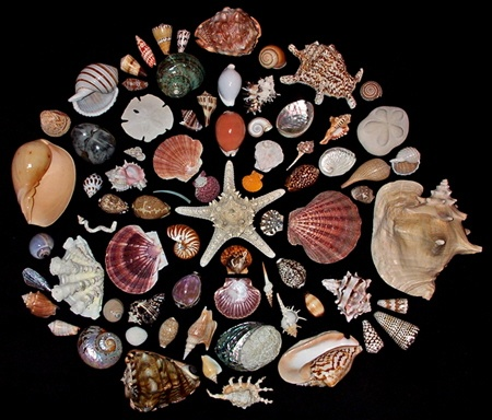 Conchomancy: Divining with Seashells