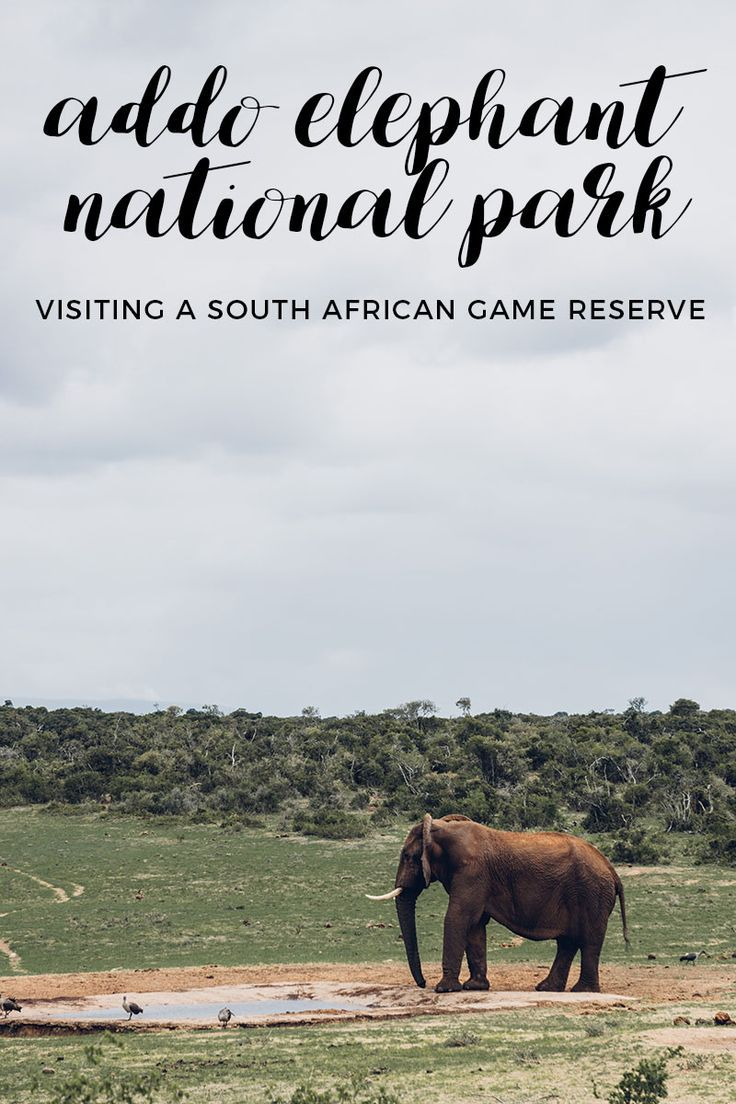 Wonder what it's like visiting a game reserve in South Africa? Check out this experience at Addo Elephant National Park! via @thshegoesagain