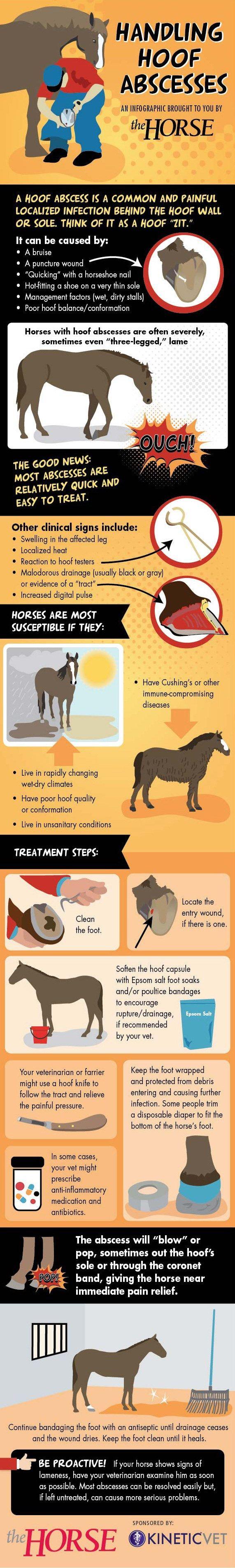 Infographic: Handling Hoof Abscesses | TheHorse.com
