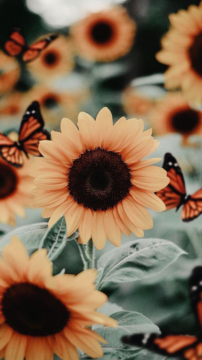 Lockscreens Sunflower Iphone Wallpaper Flower Phone Wallpaper Butterfly Wallpaper Iphone