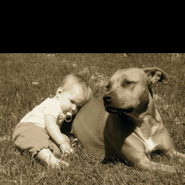 There's no best friend quite like a pit bull.: Best Friends, Sweet, Pitbull, Pit Bull