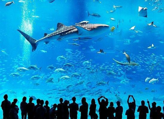 Называется Okinawa Churaumi Aquarium. По величине второй в мире аквариум, находящийся в Мотобу, о. Окинава, Япония