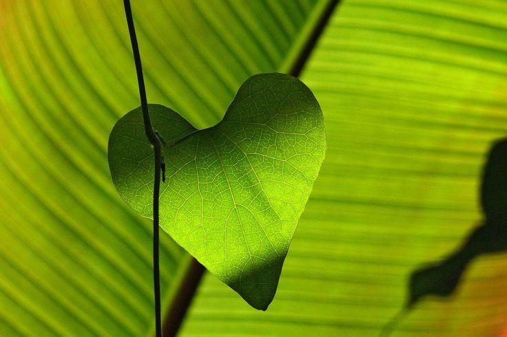 Investieren und Geld verdienen mit grünem Gewissen - Anleger können daher auf stark wachsende Rendite- und Gewinn-Chancen für sogenannte grüne Investments hoffen.