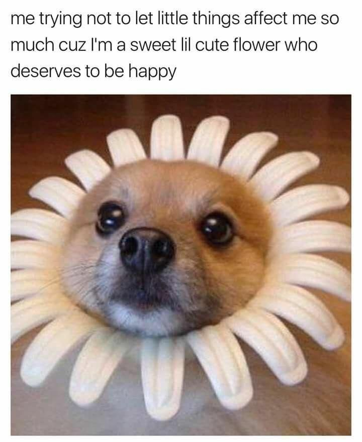 Too Pure 19 Wholesome Dog Memes Cute Dog Memes Dog Memes Funny Animal Pictures
