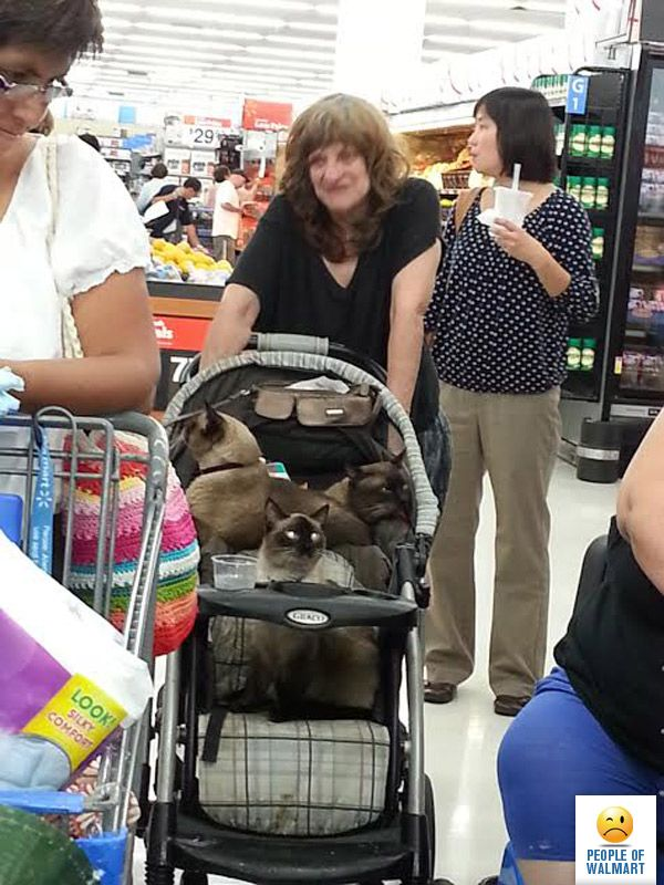 Regular people push their babies in strollers, Walmart people push their cats in strollers